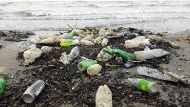 علت آلودگی سواحل به باکتری E.coli