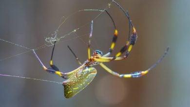 Photo of علت چسبندگی تار عنکبوت در هوای مرطوب