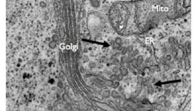 Photo of USP8: کنترلکننده تشکیل حاملان کلاژن
