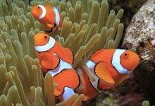 Photo of در جست و جوی ژنوم دلقک ماهی (Nemo)