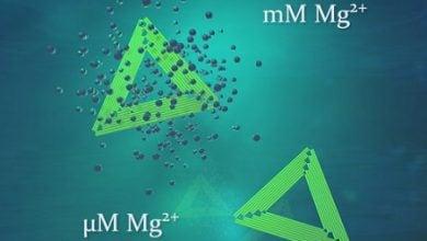 Photo of تولید نانوساختارها با تکنیک اوریگامی DNA