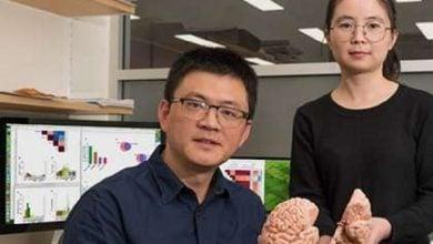 Photo of اسرار مغز، جاری در خون ما!