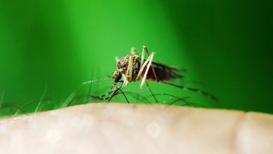 ساخت واکسن مالاریا