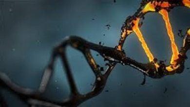 Photo of تغییر بیان ژن در مدارهای مغز با مصرف کوکائین