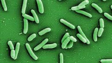 Photo of تصویربرداری از حمله باکتریها به آنتیبیوتیکها