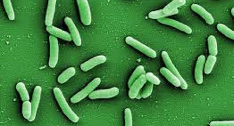 باکتریهای مقاوم به دارو در بیماری سل