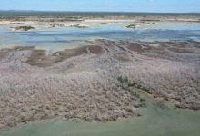 Photo of خشکسالی و سرعت گرفتن مرگ درختان به علت آفات و بیماریها