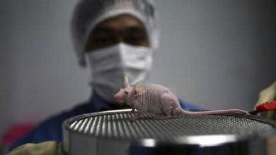 Photo of عامل انسانی سرطان در حیوانات وحشی