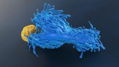 Photo of TCR عمومی عامل مقاومت علیه HIV