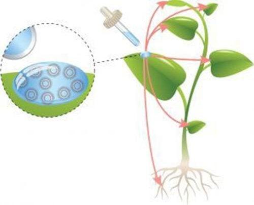 Nanotechnology for plant nutrition - اخبار زیست فن