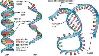 رشته RNA غیر کدگذاری شده