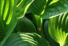 Plant symbioses -- fragile partnerships - اخبار زیست فن
