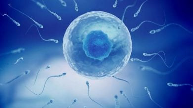 Photo of Taurine deficiency in sperm causes male infertility, study finds