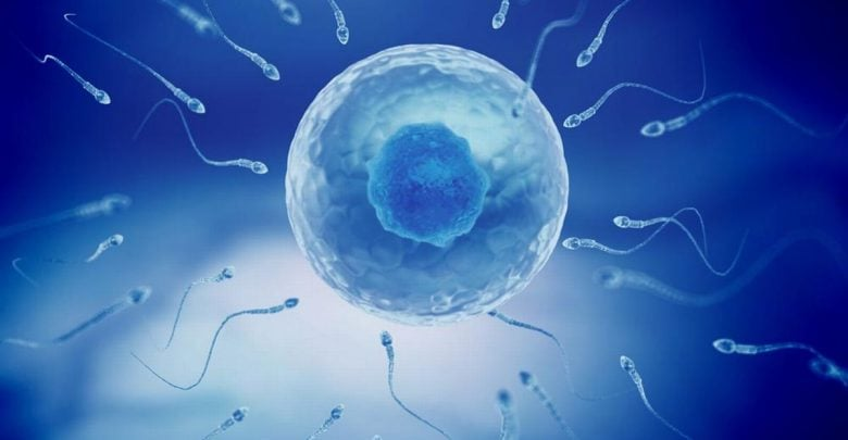 Taurine deficiency in sperm causes male infertility, study finds