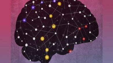 فعالیت شبکهای از RNAهای غیرکدشونده در مغز