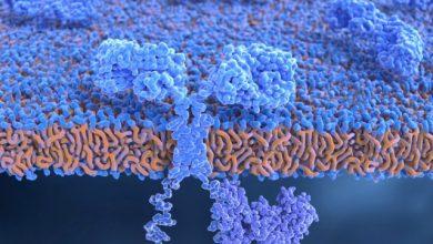 کنترل عوارض CAR T cell درمانی با هدف گیری IL-1