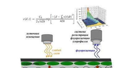 Photo of جریان سیتوپلاسمی در انتقال سیگنالها درون سلولهای بزرگ در جلبک کارا
