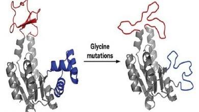 ارتباط بین ساختار و فعالیت آنزیمها
