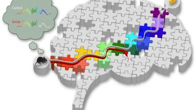 Photo of ژن مؤثر بر شکلگیری حافظه