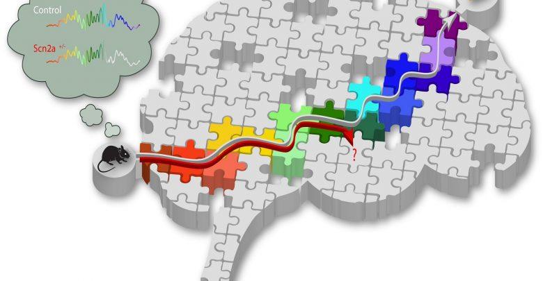 ژن مؤثر بر شکلگیری حافظه