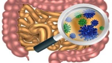 Photo of اثرات ضدتشنجی میکروبیوتای روده در رژیم کتوژنیک