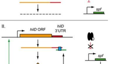 Photo of نقش RNAهای تنظیمی در عفونت با سالمونلا