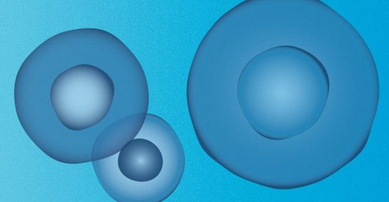 سلولهای سرکوبگر سیستم ایمنی