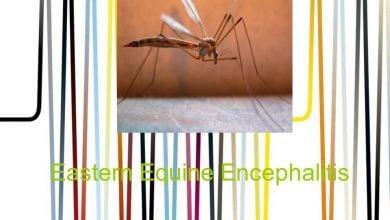 Photo of تکامل ویروس آنسفالیتاسبیشرقی (EEEV)