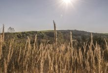 Photo of تاثیر تغییرات آب و هوایی در تولید غذای جهان