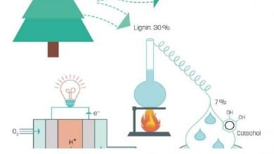 Photo of لیگنین به عنوان سوخت سبز در پیل های سوختی