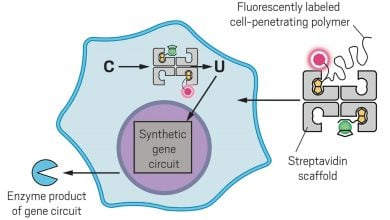 Photo of Artificial metalloenzyme flips switch in cells