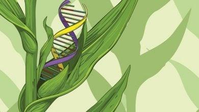 Photo of ویرایش ژنوم در کشاورزی