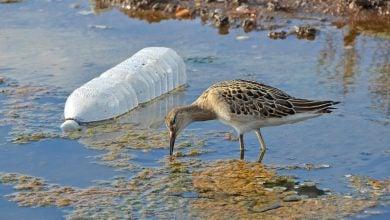 Photo of خطر میکروپلاستیک ها برای حیات آبزیان