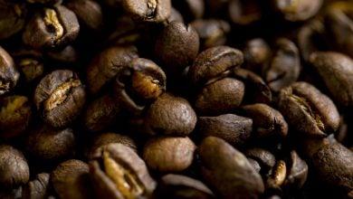 همزمان با تولد صنعت قهوه مخصوص کالیفرنیا، ژنوم Coffea arabica توالی یابی شد.