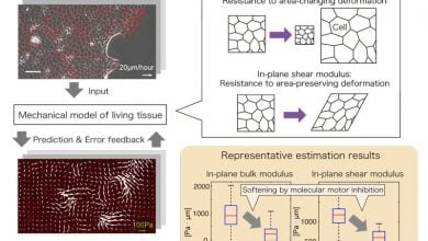 Measuring living tissue