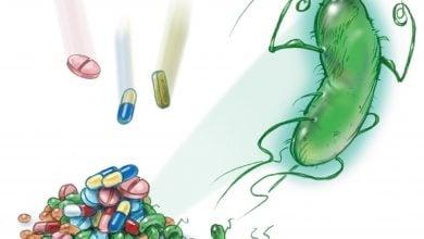 Photo of Antibiotic resistance in a leech's gut