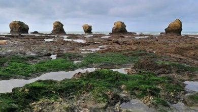 Photo of Bordeaux châteaux test algae to fight mildew
