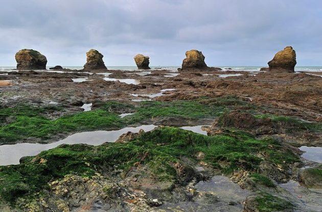 Bordeaux châteaux test algae - اخبار زیست فن