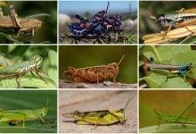 Evolutionary Tree For Major Insect Family - اخبار زیست فن