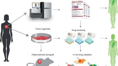 Photo of A novel data-driven method to personalize cancer treatment