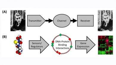 Photo of مدل های پیش گویی کننده ی عملکرد باکتری ها