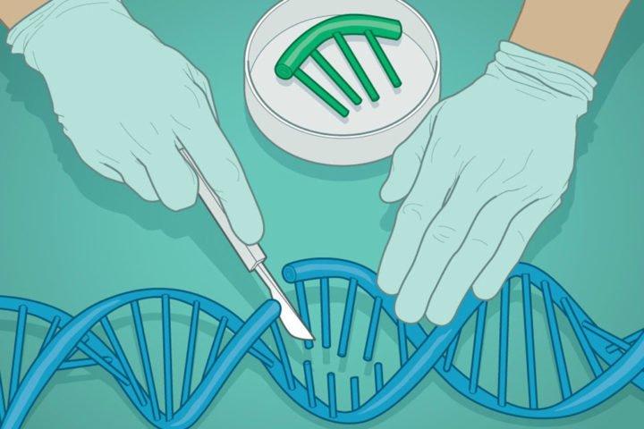 Genome Editing - اخبار زیست فن