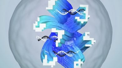 Photo of Artificial Bimolecular Networks Open Door to Sophisticated Diagnostic Testing