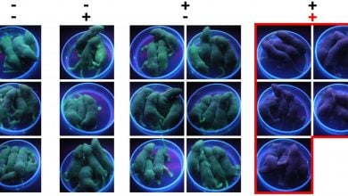 Photo of Biological Switch May Offer Better Control of Gene Editing