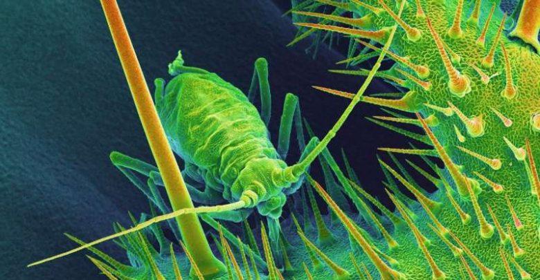 PLANT DEFENSE GENES - اخبار زیست فن