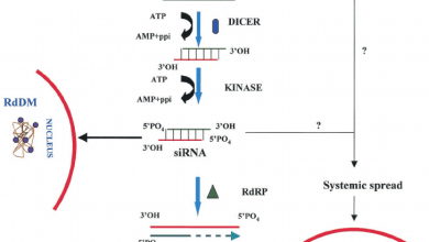 Photo of Scientists uncover steps to kinase enzyme activation