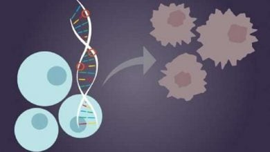 Photo of Prostate Cancer Risk Prediction Improved by DNA Test Sensitive to New Gene Variants