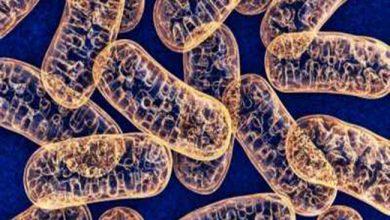 Photo of داروهای کاهشدهنده پاسخ ایمنی در تروما