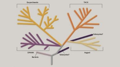Photo of Infographic: Can Archaea Teach Us About the Evolution of Eukaroyotes