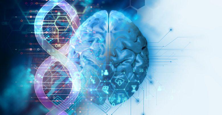 Humans' Big Brain